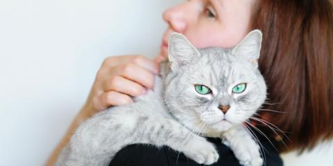 Lillian Veterinarian Explains 5 Common Health Problems for Older Cats, Lillian, Alabama