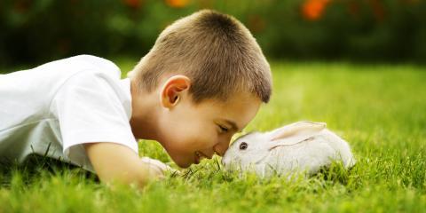 3 Popular Pet Rabbit Breeds for Children, Lincoln, Nebraska