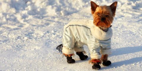 5 Pet Care Tips for Keeping Your Animal Safe During the Winter Months, Lincoln, Nebraska