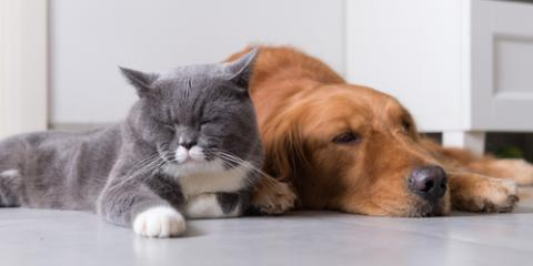 Lincoln Veterinarian Shares 4 Reasons to Spay or Neuter Your Pet, Lincoln, Nebraska