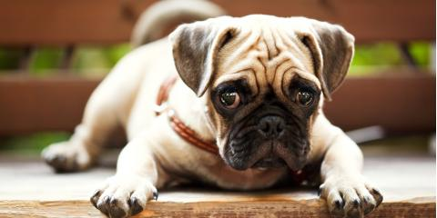 How to Care for Wrinkly Dogs, Lincoln, Nebraska