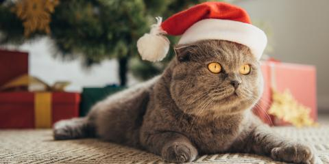 4 Holiday Safety Tips for Pets, Avon, New York