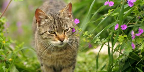 4 Tips for Keeping Your Pet Healthy This Spring, Kinsman, Ohio