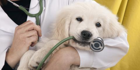 3 Reasons Your Pet Needs Regular Visits to the Veterinarian, South Shenango, Pennsylvania