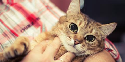 Is Spaying & Neutering Necessary for Your Pet?, Green, Ohio