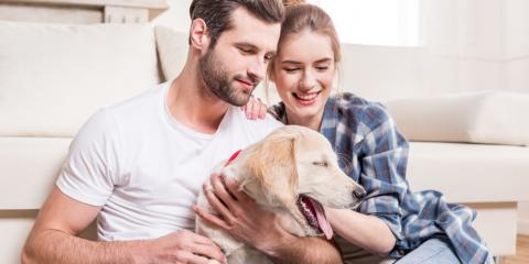 3 Tips for Introducing a New Pet to Your Home, Warren, Ohio