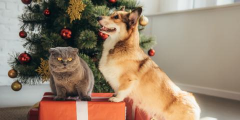 3 Holiday Pet Care Tips, Mililani Mauka, Hawaii