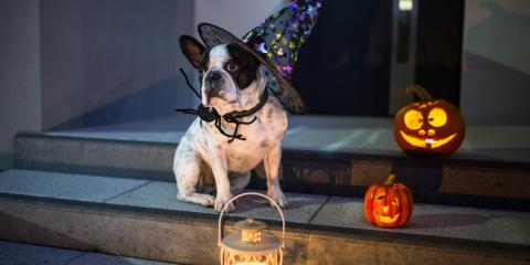 3 Halloween Hazards for Pets, Mililani Mauka, Hawaii