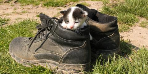 Why Do Cats Love Their Owner's Shoes?, Columbia, Missouri
