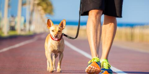 5 Tips to Improve Your Dog Walks, Ewa, Hawaii
