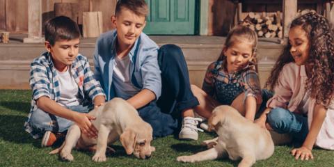 Top 6 Dog Names of 2017 - O'Fallon Veterinary Medical Center