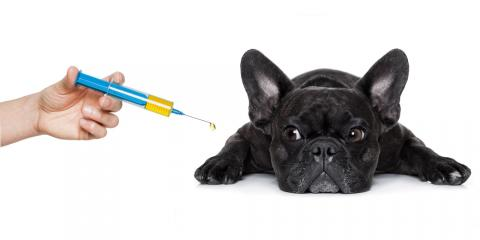 3 Reasons to Purchase Your Pet's Medication Directly From Your Veterinarian, Wentzville, Missouri