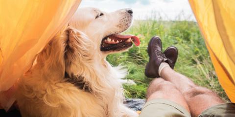 5 Ways to Keep Your Dog Healthy & Safe This Summer , Rosenberg-Richmond, Texas