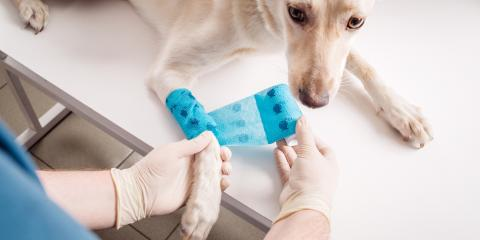 A Veterinarian's Guide to Ensuring Proper Post-Surgery Pet Care, Rosenberg-Richmond, Texas