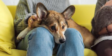 How to Help Your Dog With Separation Anxiety, Rosenberg-Richmond, Texas