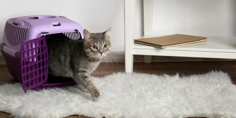 3 Tips to Get Your Cat Into Their Carrier, Columbia, Missouri