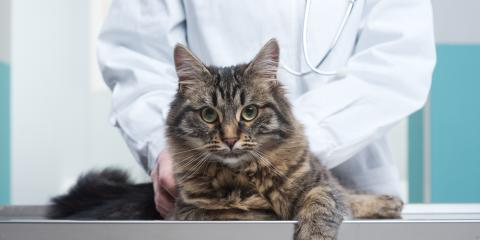 New Clients Get $15 Off Their First Veterinarian Visit, Elk Grove, California