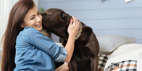 The Importance of Annual Wellness Checks for Pets, Elk Grove, California