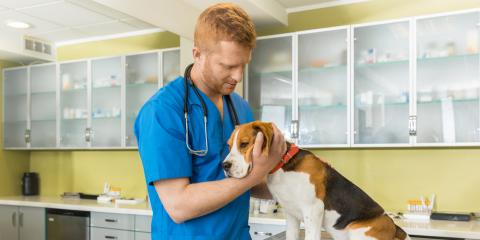 Do You Have a Senior Dog? Look out for These Common Health Issues, Elk Grove, California