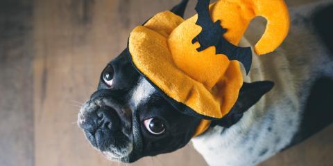 How to Keep Your Pet Safe This Halloween, Wahiawa, Hawaii