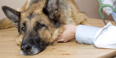 Wahiawa Veterinarian Explains Why a Dog Vomits & How You Should Handle It, Wahiawa, Hawaii