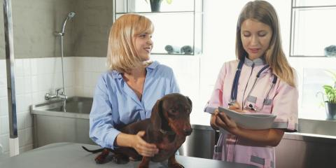 5 Questions to Ask at Your Next Veterinarian Appointment , Waynesboro, Virginia