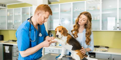3 Questions to Ask Your Veterinarian, Waynesboro, Virginia
