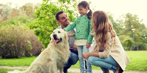 A Guide to Getting Your First Pet, III, West Virginia