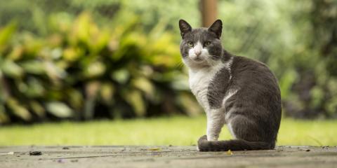 Do's & Don'ts of Having an Outdoor Cat, Lincoln, Nebraska