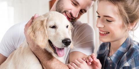 Veterinarians Share 5 Tips to Help You Prepare For a New Pet, Bolivar, Missouri