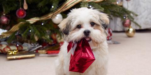 3 Safety Tips to Promote Great Pet Health This Holiday Season, Ewa, Hawaii