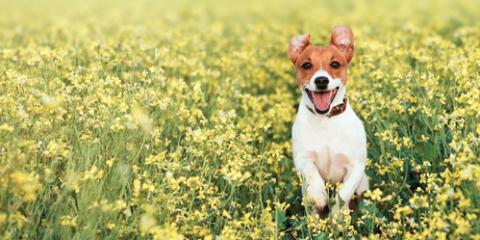 A Veterinarian's Guide to Canine Seasonal Allergies, Lillian, Alabama