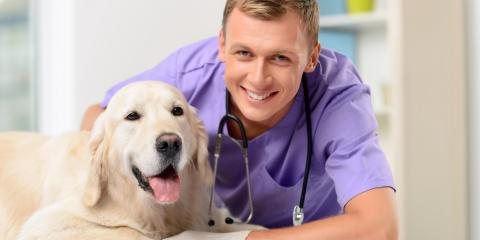 May Is Pet Cancer Awareness Month: Veterinarians Share Important Information, Columbia, Missouri