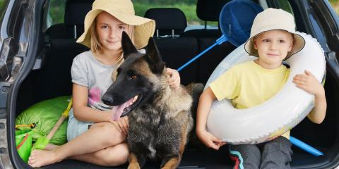 A Veterinarian's Top 5 Tips for a Pet-Friendly Road Trip, Sanford, North Carolina