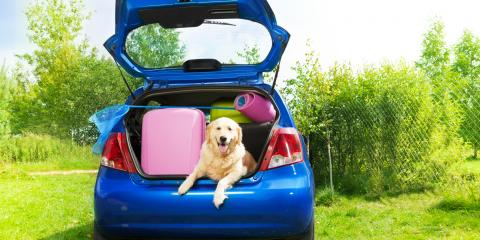5 Veterinarian-Approved Tips for Pet-Friendly Vacations, Clermont, Georgia