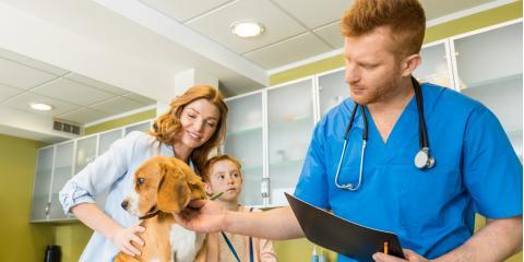 5 Reasons To Schedule an Annual Veterinarian Exam, Columbus, Nebraska