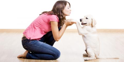 Washington's Mobile Veterinary Clinic Shares 3 Tips to Prepare for a New Pet, Bainbridge Island, Washington