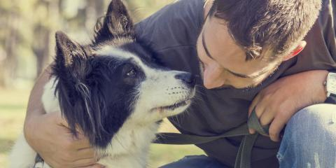 What to Know About Dogs & Sunburn, Rosenberg-Richmond, Texas
