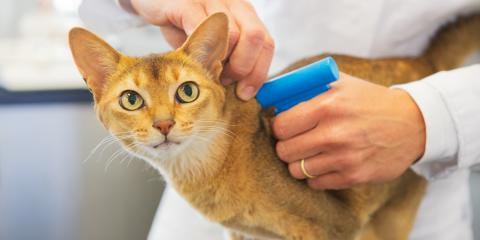 3 Important Reasons to Microchip Your Pet, Fairport, New York