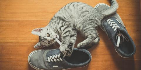 Why Do Cats Love Shoes?, Columbia, Missouri
