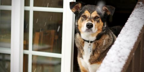 3 Ways to Protect Pets During Severe Weather, Troy, Missouri