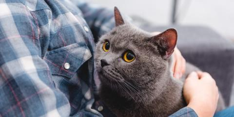 A Cat Owner's Guide to Feline Herpes, Columbia, Missouri