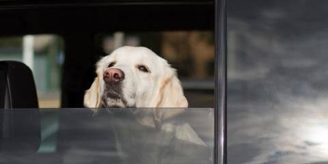 5 Steps to Take If You See a Dog in a Hot Car, Fairfield, Ohio