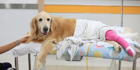 Do's and Don'ts When Your Pet Is Recovering From Surgery, Honolulu, Hawaii