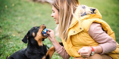 4 Tips for Keeping Your Dog's Teeth Clean, Lincoln, Nebraska