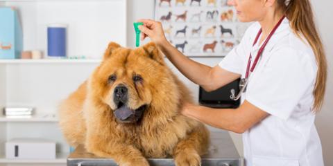 Mt. Washington Veterinarian Shares 3 Reasons Your Pet Needs Flea Medicine, Mount Washington, Kentucky