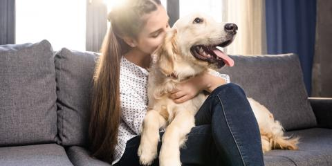 5 Common Dog Injuries, Jefferson, Ohio