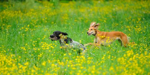 5 Dangers Pets Face in Summer, Baraboo, Wisconsin