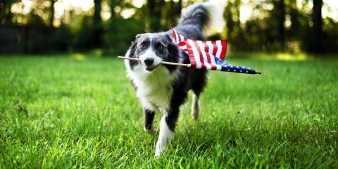 How to Ensure Your Pets' Safety on the 4th of July, Ewa, Hawaii