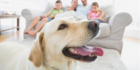 Cincinnati Veterinarian Explains the Importance of Pet Dental Cleanings, Sycamore, Ohio